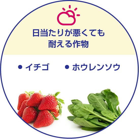 日当たりが悪くても耐える作物/・イチゴ・ホウレンソウ