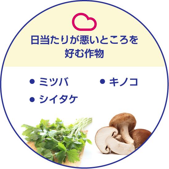 日当たりが悪いところを好む作物/・キノコ・シイタケ・ミツバ